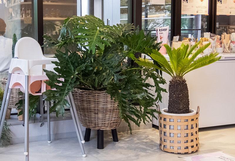 パリスタイルフラワー教室開業 ビジネスの仕組み作りとweb集客で売れるスクールへ 東京 世田谷 羽根木 KOLME(コルメ)東京の花スポット 花屋カフェ FLOWERS BAKE&ICECREAM 立川グリーンスプリングス