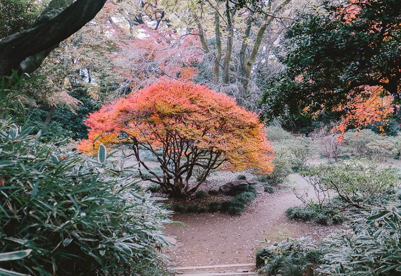 パリスタイルフラワー教室開業 ビジネスの仕組み作りとweb集客で売れるスクールへ 東京 世田谷 羽根木 KOLME(コルメ)お大名の庭で紅葉狩り「六義園」